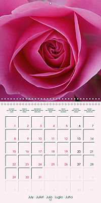 Roses Very Close (Wall Calendar 2019 300 × 300 mm Square) - Produktdetailbild 7