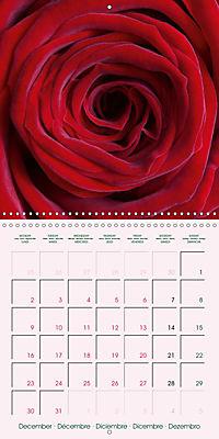 Roses Very Close (Wall Calendar 2019 300 × 300 mm Square) - Produktdetailbild 12