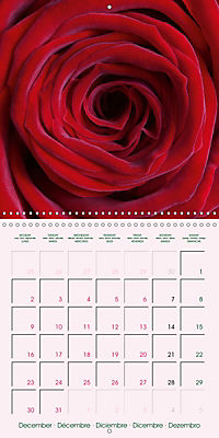 Roses Very Close (Wall Calendar 2019 300 × 300 mm Square) - Produktdetailbild 12