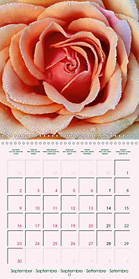 Roses Very Close (Wall Calendar 2019 300 × 300 mm Square) - Produktdetailbild 9