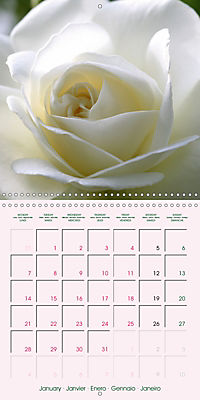 Roses Very Close (Wall Calendar 2019 300 × 300 mm Square) - Produktdetailbild 1
