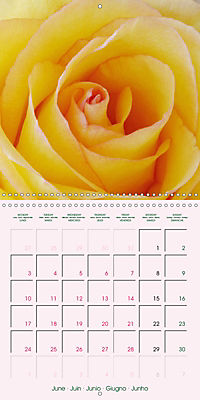 Roses Very Close (Wall Calendar 2019 300 × 300 mm Square) - Produktdetailbild 6