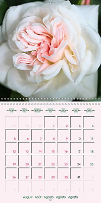 Roses Very Close (Wall Calendar 2019 300 × 300 mm Square) - Produktdetailbild 8