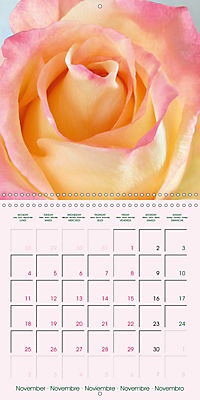 Roses Very Close (Wall Calendar 2019 300 × 300 mm Square) - Produktdetailbild 11