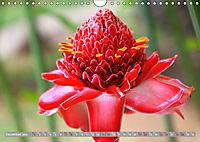 Rot im Blick (Wandkalender 2019 DIN A4 quer) - Produktdetailbild 12