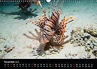 Rotes Meer - Ägyptens Süden (Wandkalender 2019 DIN A3 quer) - Produktdetailbild 11