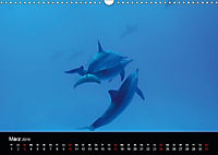 Rotes Meer - Ägyptens Süden (Wandkalender 2019 DIN A3 quer) - Produktdetailbild 3
