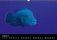 Rotes Meer - Ägyptens Süden (Wandkalender 2019 DIN A3 quer) - Produktdetailbild 8