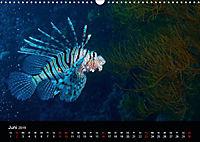 Rotes Meer - Ägyptens Süden (Wandkalender 2019 DIN A3 quer) - Produktdetailbild 6