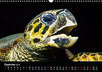 Rotes Meer - Ägyptens Süden (Wandkalender 2019 DIN A3 quer) - Produktdetailbild 12