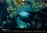 Rotes Meer - Ägyptens Süden (Wandkalender 2019 DIN A3 quer) - Produktdetailbild 9
