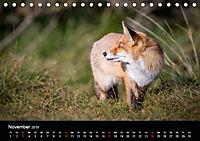 Rotfüchse (Tischkalender 2019 DIN A5 quer) - Produktdetailbild 2