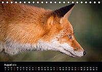 Rotfüchse (Tischkalender 2019 DIN A5 quer) - Produktdetailbild 1