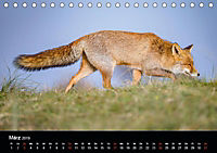 Rotfüchse (Tischkalender 2019 DIN A5 quer) - Produktdetailbild 5