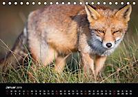 Rotfüchse (Tischkalender 2019 DIN A5 quer) - Produktdetailbild 7