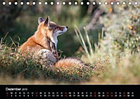 Rotfüchse (Tischkalender 2019 DIN A5 quer) - Produktdetailbild 12