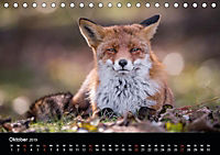 Rotfüchse (Tischkalender 2019 DIN A5 quer) - Produktdetailbild 11