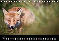 Rotfüchse (Tischkalender 2019 DIN A5 quer) - Produktdetailbild 13