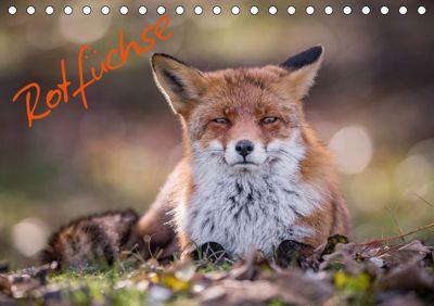 Rotfüchse (Tischkalender 2019 DIN A5 quer), Markus van Hauten
