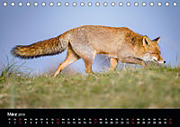Rotfüchse (Tischkalender 2019 DIN A5 quer) - Produktdetailbild 3
