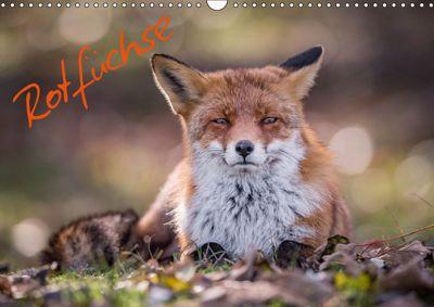 Rotfüchse (Wandkalender 2019 DIN A3 quer), Markus van Hauten