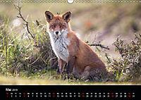 Rotfüchse (Wandkalender 2019 DIN A3 quer) - Produktdetailbild 5