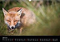 Rotfüchse (Wandkalender 2019 DIN A3 quer) - Produktdetailbild 7
