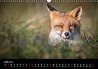 Rotfüchse (Wandkalender 2019 DIN A3 quer) - Produktdetailbild 6