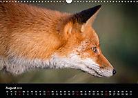 Rotfüchse (Wandkalender 2019 DIN A3 quer) - Produktdetailbild 8