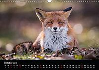 Rotfüchse (Wandkalender 2019 DIN A3 quer) - Produktdetailbild 10