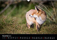 Rotfüchse (Wandkalender 2019 DIN A3 quer) - Produktdetailbild 11