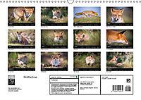 Rotfüchse (Wandkalender 2019 DIN A3 quer) - Produktdetailbild 13