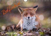 Rotfüchse (Wandkalender 2019 DIN A4 quer), Markus van Hauten