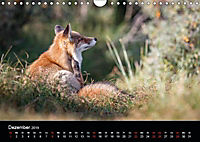 Rotfüchse (Wandkalender 2019 DIN A4 quer) - Produktdetailbild 4