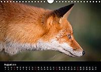 Rotfüchse (Wandkalender 2019 DIN A4 quer) - Produktdetailbild 5