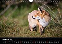 Rotfüchse (Wandkalender 2019 DIN A4 quer) - Produktdetailbild 8