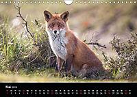 Rotfüchse (Wandkalender 2019 DIN A4 quer) - Produktdetailbild 12