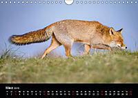 Rotfüchse (Wandkalender 2019 DIN A4 quer) - Produktdetailbild 3