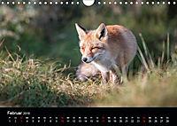 Rotfüchse (Wandkalender 2019 DIN A4 quer) - Produktdetailbild 2