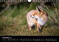 Rotfüchse (Wandkalender 2019 DIN A4 quer) - Produktdetailbild 11