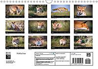 Rotfüchse (Wandkalender 2019 DIN A4 quer) - Produktdetailbild 13