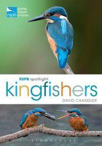 RSPB Spotlight Kingfishers, David Chandler