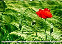 Ruhe und Mitte finden (Wandkalender 2019 DIN A2 quer) - Produktdetailbild 6