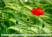 Ruhe und Mitte finden (Wandkalender 2019 DIN A4 quer) - Produktdetailbild 6