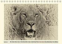 Safari - auf Katzensuche (Tischkalender 2019 DIN A5 quer) - Produktdetailbild 4