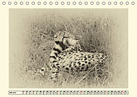 Safari - auf Katzensuche (Tischkalender 2019 DIN A5 quer) - Produktdetailbild 5