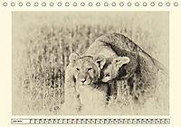 Safari - auf Katzensuche (Tischkalender 2019 DIN A5 quer) - Produktdetailbild 6