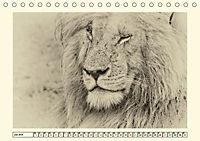 Safari - auf Katzensuche (Tischkalender 2019 DIN A5 quer) - Produktdetailbild 7