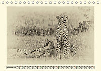 Safari - auf Katzensuche (Tischkalender 2019 DIN A5 quer) - Produktdetailbild 11