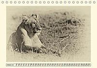 Safari - auf Katzensuche (Tischkalender 2019 DIN A5 quer) - Produktdetailbild 10